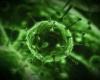 Цитомегаловирусная инфекция при беременности