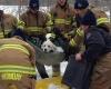 Собака из Эдмонтона по кличке Роско, выживает после 24 часов, проведенных во льдах реки Норт-Саскачеван