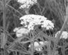 Гепатит С - лечение травами помогает