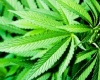 Борьба с зависимостью от марихуаны может потребовать полного преобразования