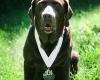 Собака пробежала половину марафона в Индиане и умерла от сердечного приступа