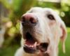 Собаки могут обнаружить рак простаты с 98% точностью